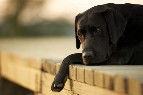sad-dog-wallpaper-1